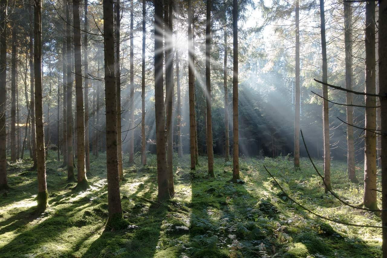 Professional tree care in Victoria BC